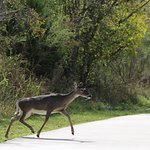 Foto de Leon Creek Greenway Trails