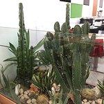 Foto de Cactus Senshi
