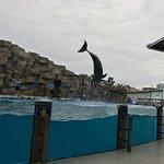صورة فوتوغرافية لـ Dolphinarium