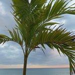 Nice palms!