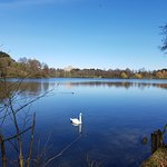 Wollaton Hall and Park Foto