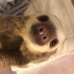 Photo de Sloth Sanctuary of Costa Rica