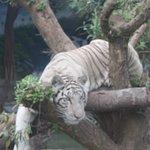Foto Zoologico de San Martin