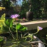Phuket Botanic Garden Foto