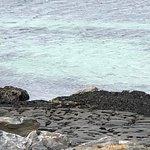 Harbor Seals at Seal Beach
