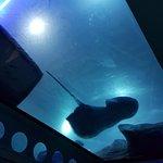 Photo of National Marine Aquarium