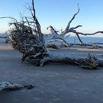 Big Talbot Island State Park의 사진