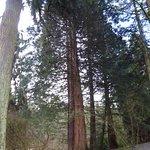 Foto de Washington Park Arboretum