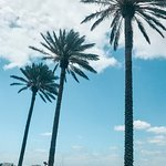 Palm Trees do it for me