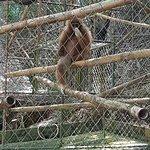 Gibbon Rehabilitation Project Foto
