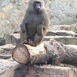 Photo de Wroclaw Zoo & Afrykarium