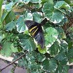 Foto Butterflies Garden Restaurant
