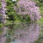 三溪园照片