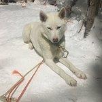 صورة فوتوغرافية لـ Tundra Huskies Husky Safaris