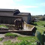 L'enclos des éléphants. Vous pouvez voir au fond à droite, la tête de l'éléphant qui se balance.