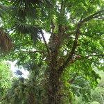 Waimea Falls & Botanical Gardens