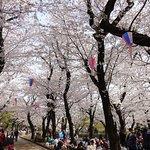 Foto di Asukayama Park