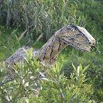 disfraz dinosaurio rex 2017 de 5  metros po 2.10 de alto con moviientos