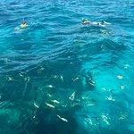 Spirit Snorkeling 사진