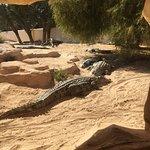 The Crocodile Farm – fénykép