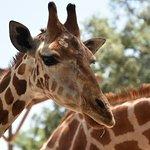 Photo de Giraffe Ranch