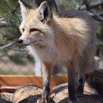 Foto van Yellowstone Wildlife Sanctuary