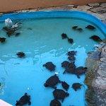 Photo de Aquaworld Aquarium & Reptile Rescue Centre