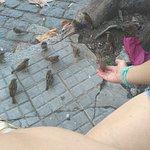Los pájaros se acercan para pedir migas