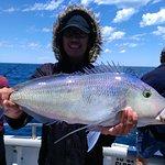 Reef Encounters Fishing Charters Blue Morwong