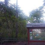 Photo de Saltos del Petrohue
