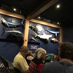 Foto de North Carolina Aquarium on Roanoke Island
