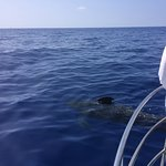 Foto de Captain Dan McSweeney's Whale Watching Adventures