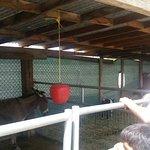 Fun petting zoo