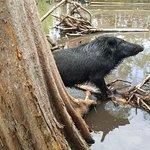 Photo de Dr. Wagner's Honey Island Swamp Tours
