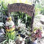 Welcome to Milea Bee Farm!