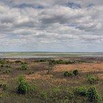 Foto di Paynes Prairie Preserve State Park