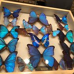 Massive collections of butterflies