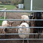 Cholderton Charlie's Farm