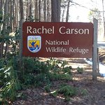 Rachel Carson National Wildlife Refuge Foto