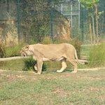 Photo of Zoo Santo Inacio