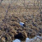 Photo of Kushiro Shitsugen National Park