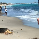 Turtle from the center being released to ocean