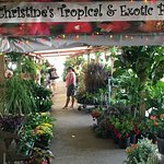 Christine's Tropical And Exotic Plants! Stay awhile! Say hey to Rick and Julia for us.