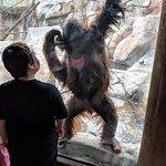 Louisville Zoo Foto