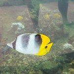Foto de Waikiki Aquarium