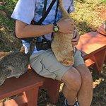 cat loving
