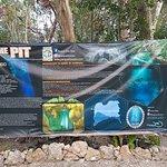 Photo de Diving Cenotes Tulum