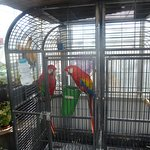 Pair Of Parrots - In Bird Section