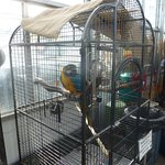 Colourful Parrot - With Warning On Cage - Keep Fingers Out