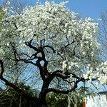 Photo de Yongdusan Park